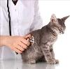 Ветеринарные клиники в Заринске